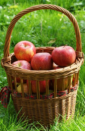 windfalls: Fresh organic apples in a basket