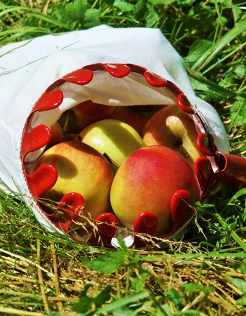 windfalls: Freshly picked organic apples in a basket