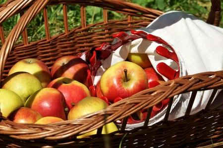 windfalls: Organic apples in a basket