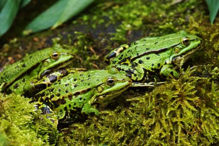insectivores: Frogs in a pond