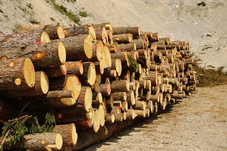 illegal logging: A large quantity of logs lying in the sun Stock Photo