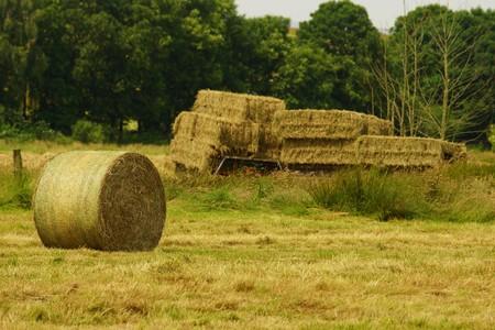 bales: Straw bales in summer