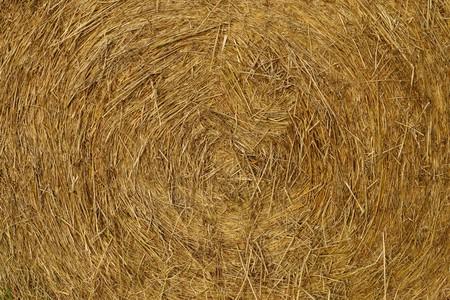 wheatfield: Huge straw bales in a meadow