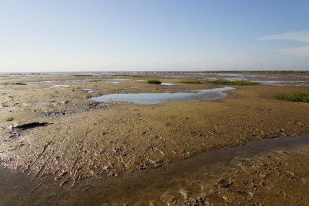 insecticidal: North Sea at low tide in summer Stock Photo