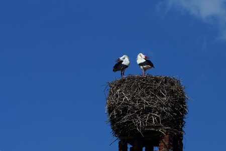 avian: Stork couple in a nest on a chimney Stock Photo