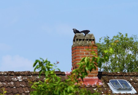 jackdaw: Jackdaw couple on a chimney of a house