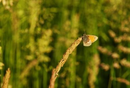 Beautiful butterfly - orange tip in a meadow Stock Photo