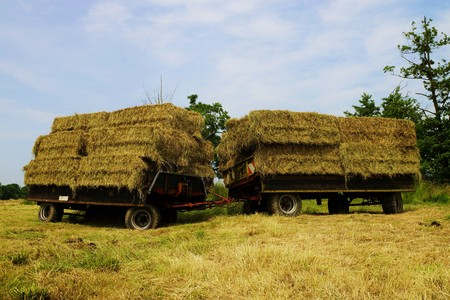 agricultural engineering: Straw bales on a trailer in a meadow Stock Photo