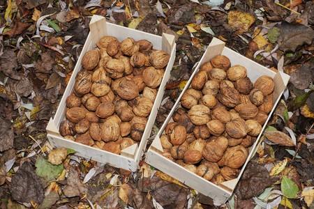 Fresh walnuts in two boxes Foto de archivo