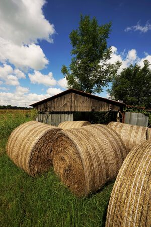 Big straw bales under blue sky in summer