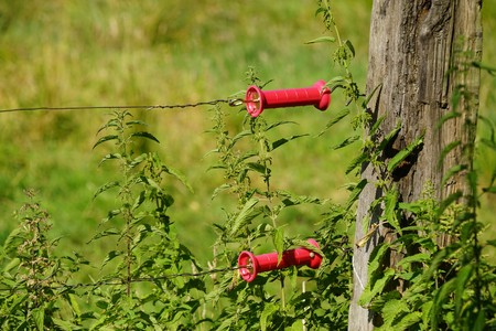 Electric fence on a pasture in summer Stock Photo