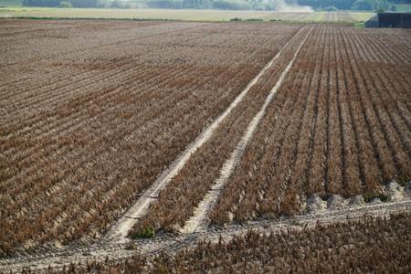 Dried field in Schleswig-Holstein in summer Stock Photo