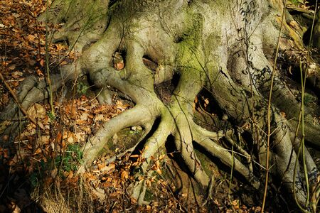 Visible tree roots above the forest floor