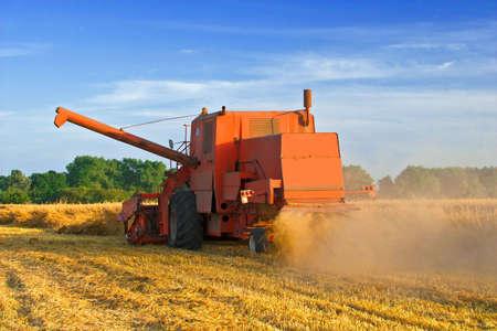 cosechadora: Cosechadora de edad sucia durante un corte de cultivos en la tarde