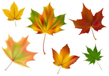 Diverse Vektor Ahorn Blätter. Ein paar verschiedene Arten, Farben und Formen. Mit Farbverlauf Mesh gemacht.  Standard-Bild - 5607681