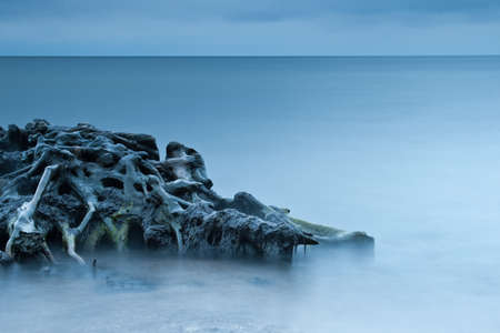 windless: Roots of fallen tree laying in the water Stock Photo