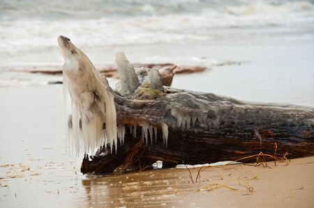 resemble: Bark with roots thrown by the sea during winter storm, covered with ice. One of the roots resemble fish.