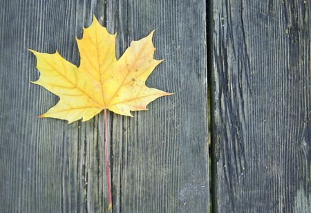 yellow leaf on a bench