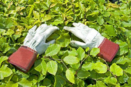 Gardening Glove on green leaf