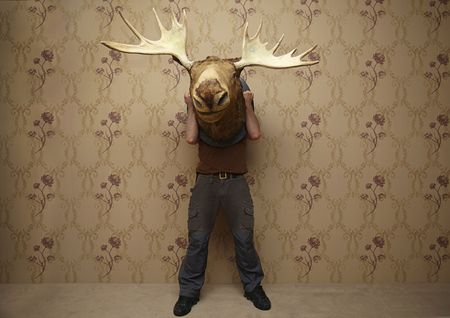 animals horned: man is hiding behinde a moose head