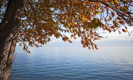 horizon over water: Horizon Over Water with a tree in autumn