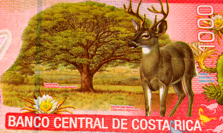 costa rican: 1000 Costa Rican colones bank note. Colones is the national currency of Costa Rica Stock Photo