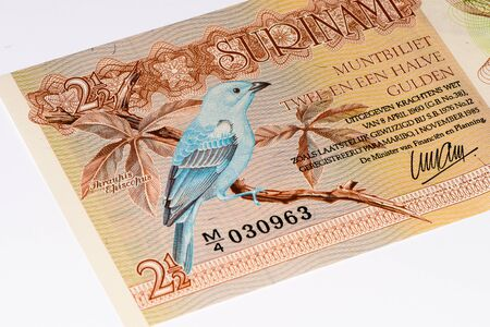gulden: 2.5 Surinamese gulden bank note. Gulden is the former currency of Suriname