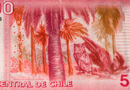 chilean: 5000 Chilean pesos bank note. Chilean peso is the national currency of Chile