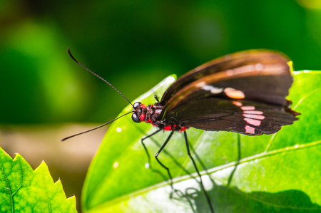 Beautiful butterfly on the plants in Mexico Stock Photo