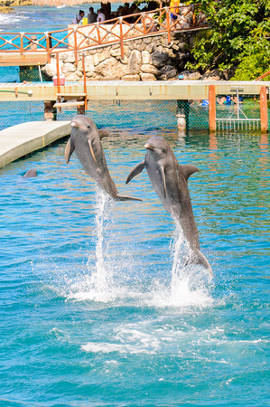 Couple of dolphins jump out of the water