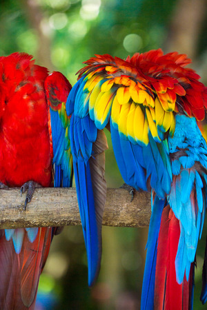 yucatan: Macau parrot Stock Photo