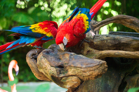 Macau papegaai Stockfoto