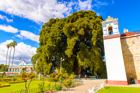 The Tree of Tule (El Arbol de Tule),  Montezuma cypress or ahuehuete in  Nahuatl. UNESCO World Heritage