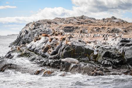 Sea lions on the rock, Beagle Channel, Tierra del Fuego Stock Photo
