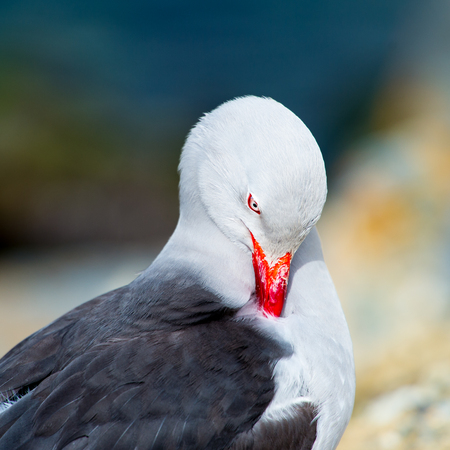 Portrait of a sea gull