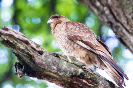 Kestrel on a branch of the tree Stock Photo