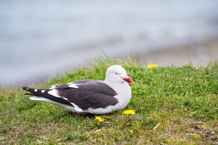 Sea gull on the coast of the sea Stock Photo
