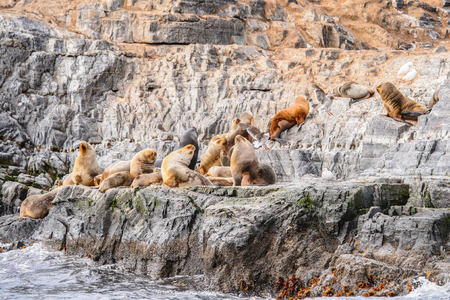 tierra: Group of the sea lions on the rock, Beagle Channel