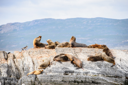 Sea lions lying on the rock in Antarctica Stock Photo