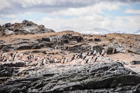 tierra: Polar ducks on the rock, Beagle Channel