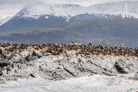 Polar ducks on the rock, Beagle Channel