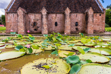 Lily Pad swamp in Nieuw Amsterdam, Suriname