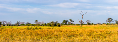 Landscape of the Okavango Delta (Okavango Grassland), One of the  Seven Natural Wonders of Africa, Botswana Stock fotó