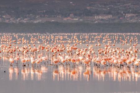 Flamingo Foto de archivo