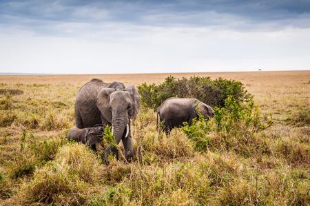 nakuru: African elephant and its little baby in Kenya, Africa Stock Photo