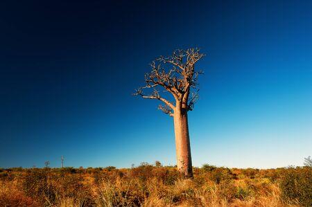 Alone bamboo tree in Madagascar