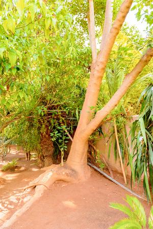 Jardin Mojarelle in Marrakesh, Morocco. It is the capital city of the mid-southwestern region of Marrakesh-Asfi.