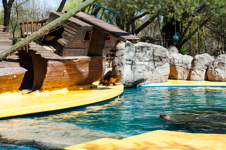 Sea lion from California makes a performance in the Zoo