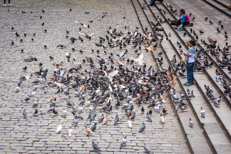 QUITO, ECUADOR - JAN 2, 2015: Unidentified Ecuadorian boy feeds pigeon. 71,9% of Ecuadorian people belong to the Mestizo ethnic group