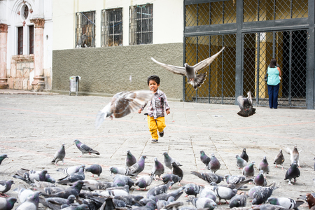 CUENCA, ECUADOR - JAN 9, 2015: Unidentified Ecuadorian boy plays with pigeons. 71,9% of Ecuadorian people belong to the Mestizo ethnic group